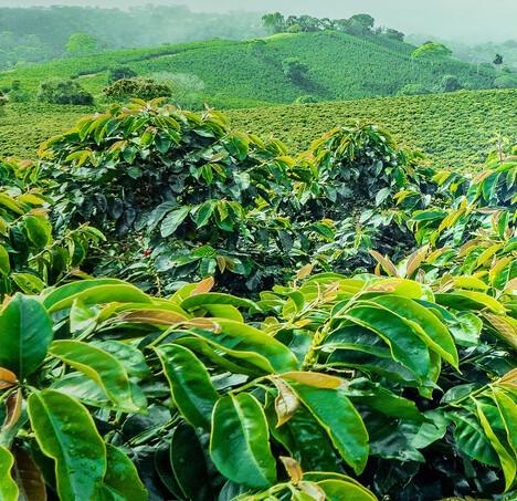 Kaffeekapseln. Wie nachhaltig sind Kaffeekapseln?</span><span>