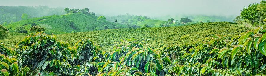 Wie nachhaltig sind Nespresso und Co?